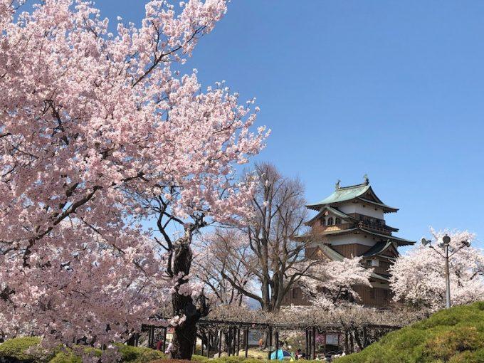 高島城の桜
