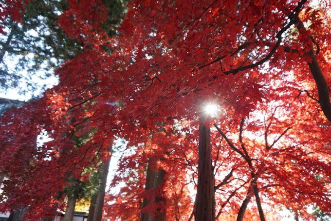 長円寺の紅葉