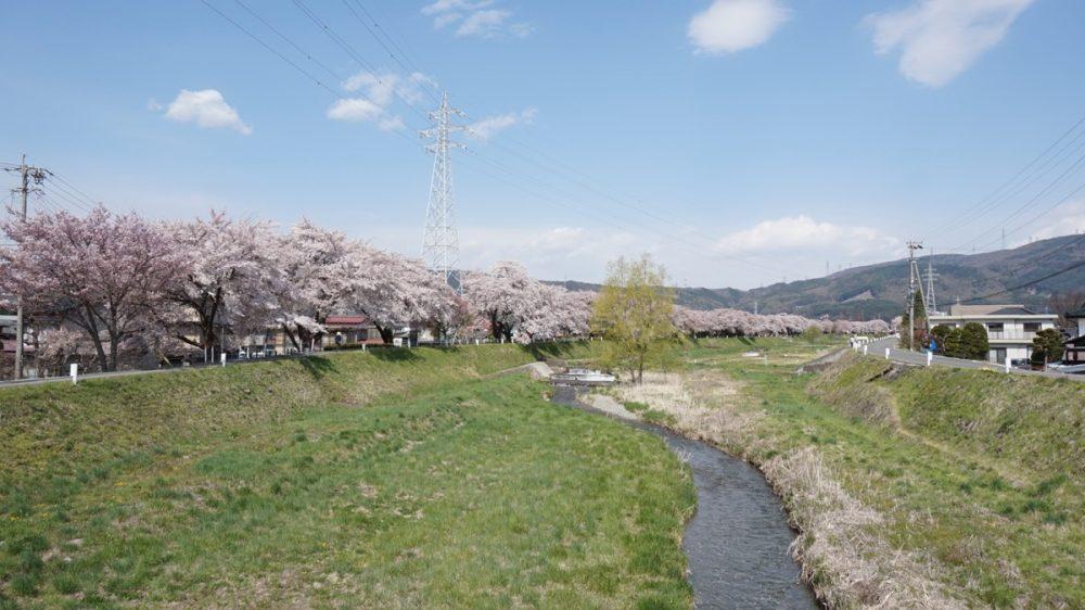 岡谷の横川河の桜